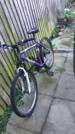 Apollo twilight women's mountain bike