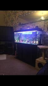 Fish tank and stand fluval