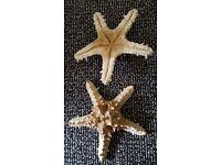 Original star fish shells