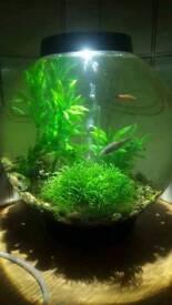 Bio orb fish tank