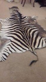 Zebra skin rug wall hanging