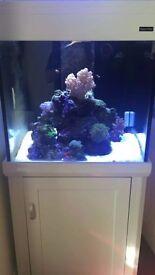 White Aqua one 275 marine tropical fish tank aquarium with setup
