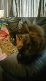 Rehousing lovely female 1 year old cat