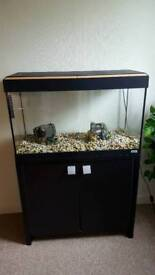 Fluval Roma 125 and cabinet