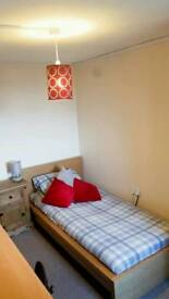 Single room for rent £260pm