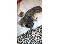Loving kittens looking for a home
