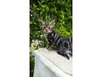 kittens 1 boys barking ig11 0gf