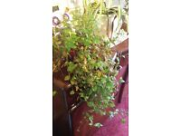 indoor plant with plant pot