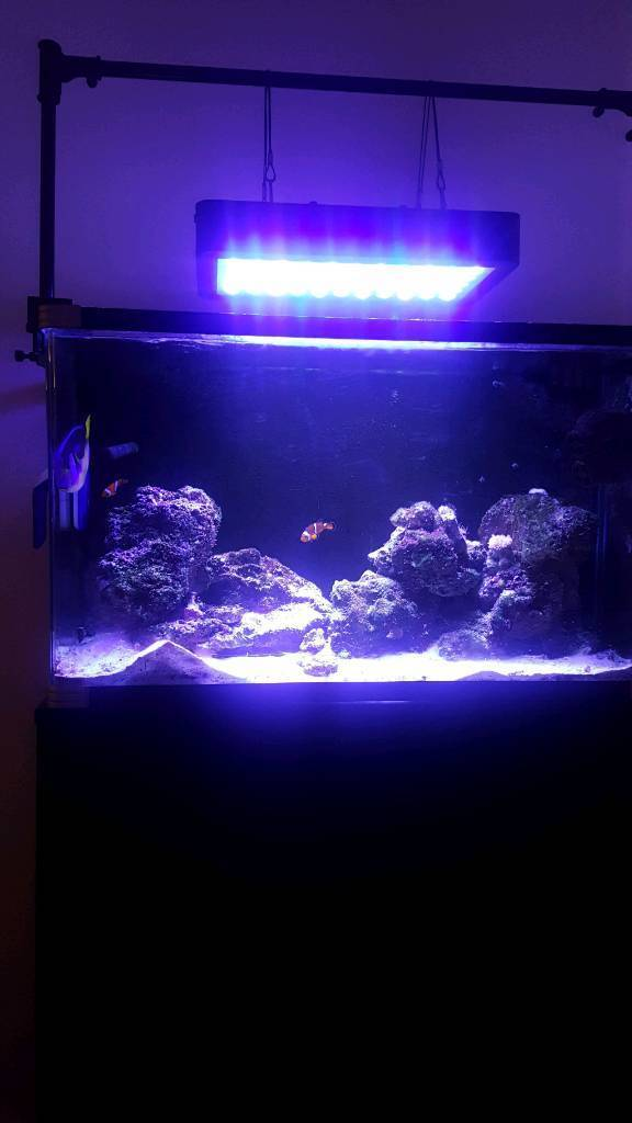 Fish tank reef aquarium