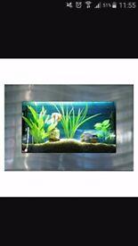 Wall hung fish tank brand new