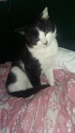 2 male cats need of a home