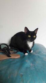 Black and white petite cat