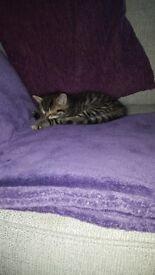****kittens****