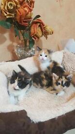 9 weeks old 5 kittens