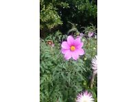 Offering Affordable Garden Maintenance/ Tidying/Grass cutting /Painting