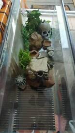 Full gecko set up.