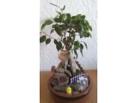 Natural bonsai tree-mini garden