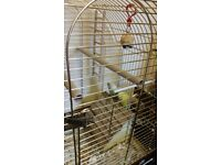 budgies with golden movable home(cage) need a new house