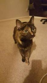 Lilly needs a new loving home