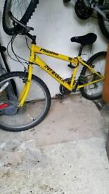 Bike Ladies & gents boys