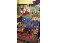4 male degus and very large cage