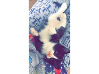 4 kittens looking for new homes £40 each