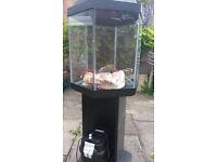 60lt fish tank