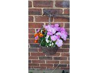 Plants/flowers/hanging basket/pots
