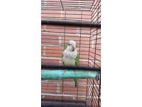 Quacker for sale