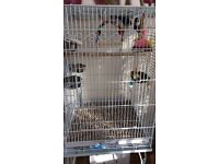 2 birds for sale with cage