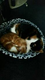 2 cats for sale must go together