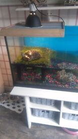 4ft Terrapin tank and accessories for sale