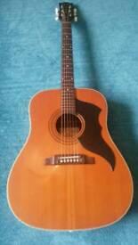 1960s vintage Eko ranger acoustic guitar