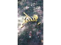 Yellow bug scooter