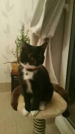 Kitten and pole scratcher