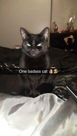 1 yr old female black cat