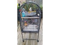 A Beautiful Pair of Quaker Parrots Complete with Cage