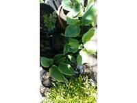 Hardy garden plants