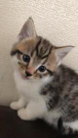 4 kitten
