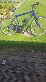 conquest concept mens bike