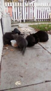 Stray Kittens Need A Good Home-Free