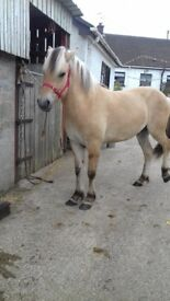 14.1 pony .deposit taken