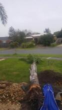 Palm tree for sale 3-4 meters Lyndhurst Greater Dandenong Preview