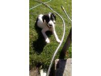 11 week old puppy