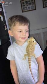 I will be selling bearded dragon hatchlings for £60 each