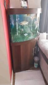 Trigon 190 aquarium