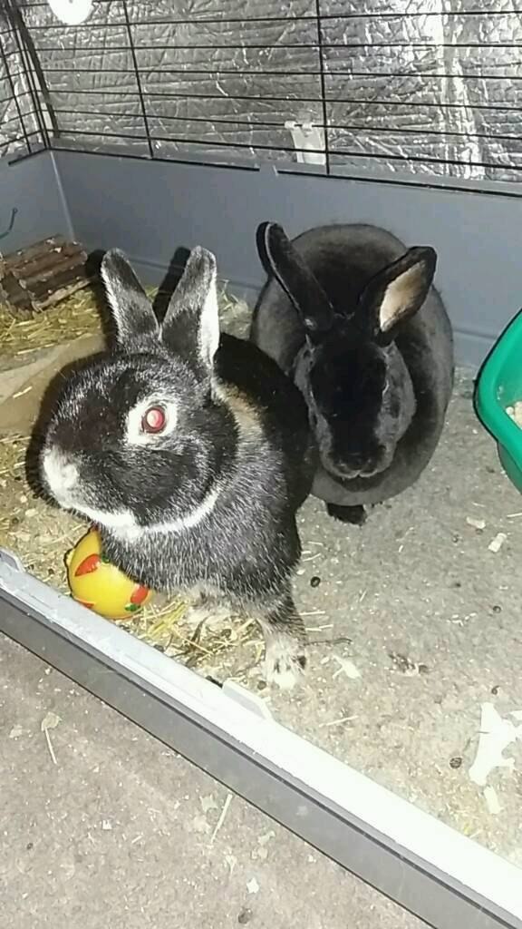 2 bunnies free to a good home