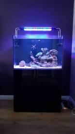 Marine aquarium (complete set up)