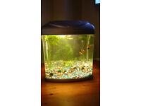 Small fish tank, aquarium plus Fish and live plants