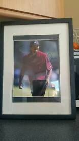 Tiger woods sighned photo
